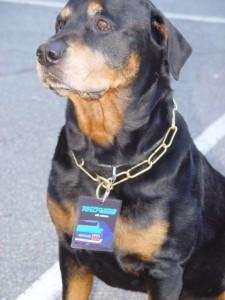 Stromer - der Tourhund. R.I.P.
